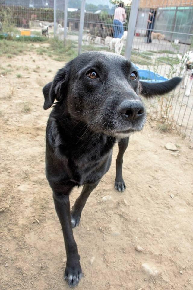 Hunde Von Arme Hundeseelen Aus Rum 228 Nien Suchen Ein Zuhause Andreas Tierhilfe